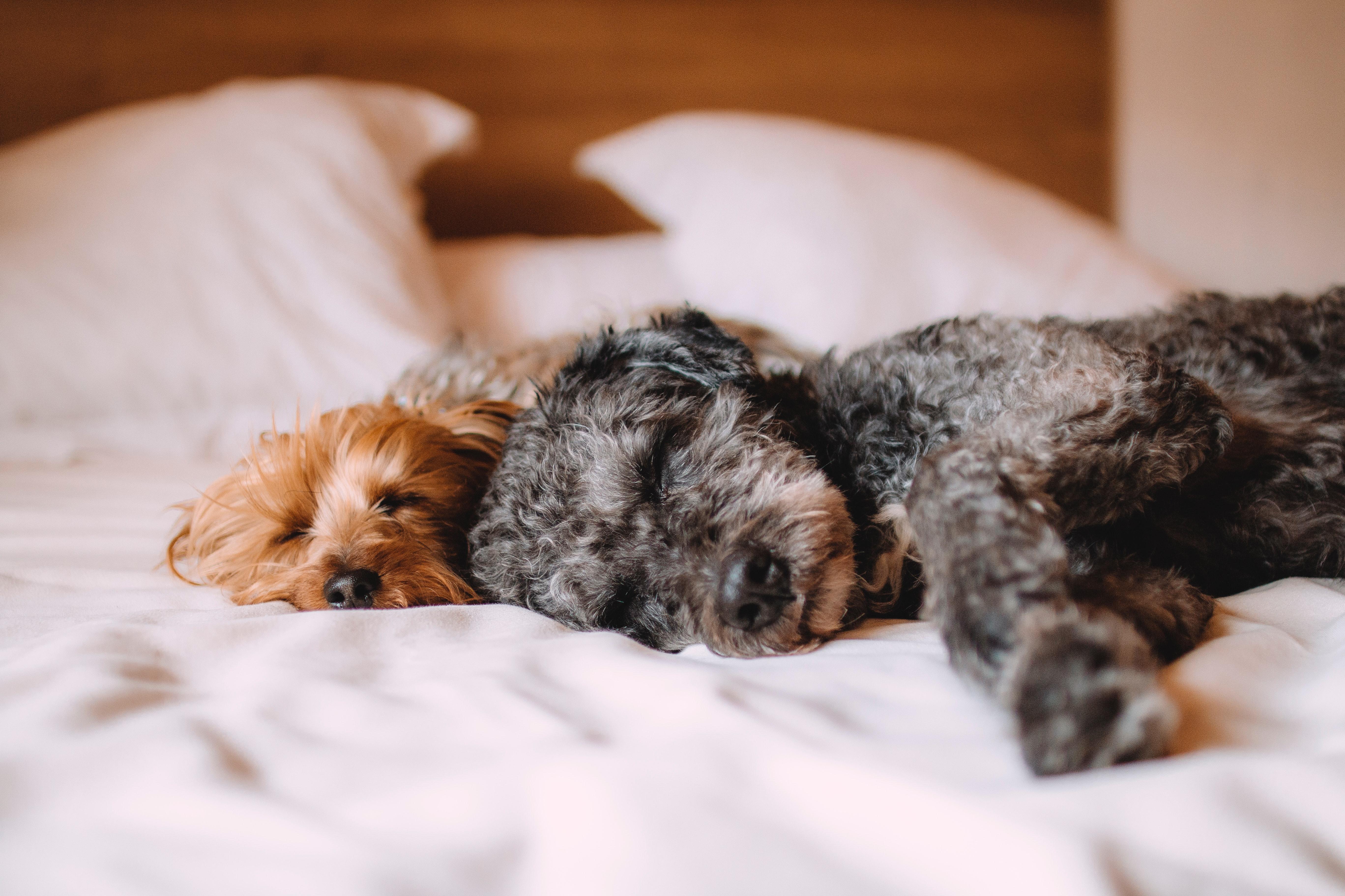 animals-bed-calm-57627